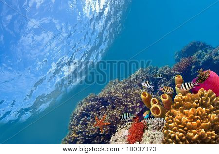 Tube Coral and Starfish. shot in the Red Sea poster