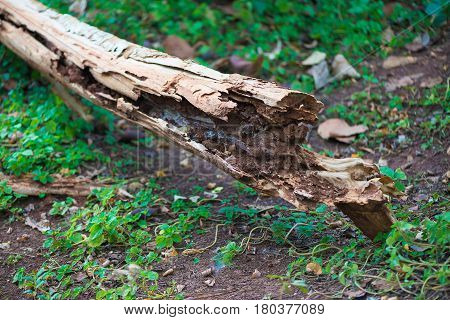 Decay Wood In Garden Or Park.