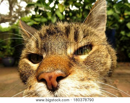 Cool cat chilling in the garden. Close-up of a tabby cat face. Orange nose. Grey gray striped fur. Sniff.