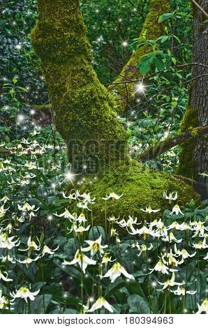 Ancient mossy Tree surrounded by a meadow of Fawn Lily flowers and glowing magical fairies at twilight