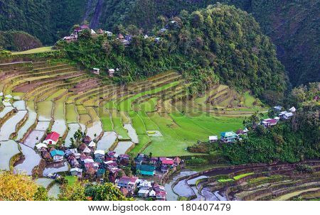 Beautiful Green Rice terraces in the Philippines. Rice cultivation in the Luzon island.