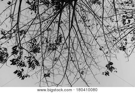 Tree branches silhouette with gray sky in rainny day despair or hopeless concept
