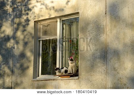 A couple of cats sitting on the window