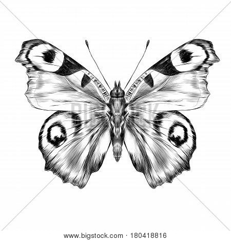 butterfly with open wings top view the symmetrical drawing graphics sketch vector black and white drawing