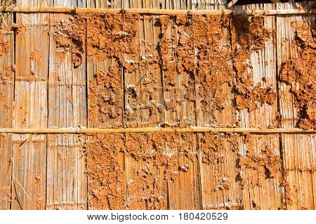 closeup termite nest on wooden wall of a wooden house Thailand