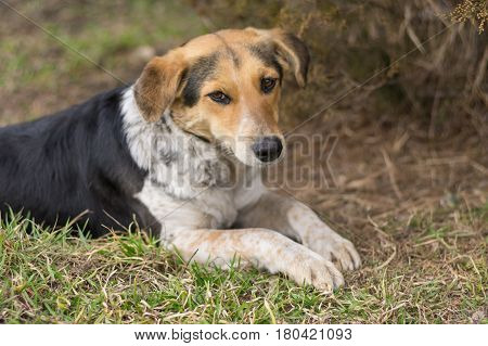 Portrait of mixed breed stray female dogs lying on a ground at early spring season