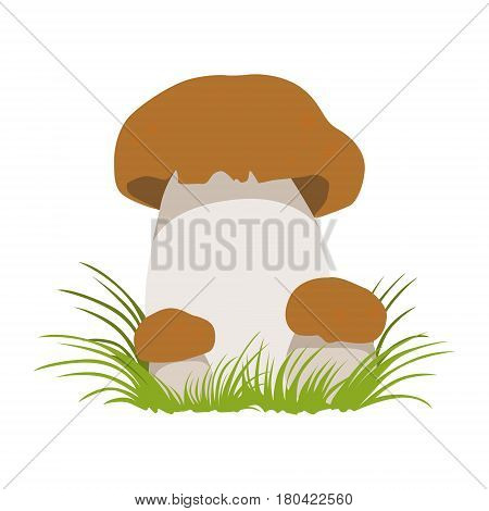 Boletus, autumn cep, edible forest mushrooms. Colorful cartoon illustration isolated on a white background
