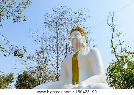 Big Buddha statue and big trees in garden.