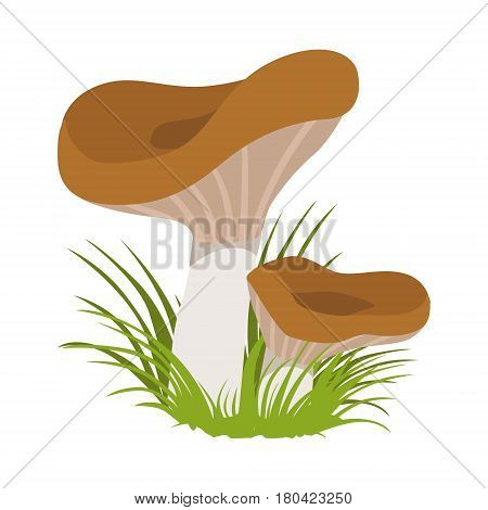 Lactarius deliciosus, edible forest mushrooms. Colorful cartoon illustration isolated on a white background