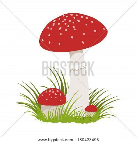 Amanita muscaria, poisonous mushrooms. Colorful cartoon illustration isolated on a white background