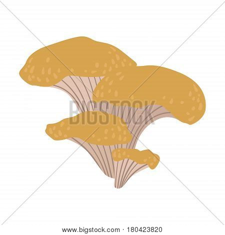 Chanterelle, edible forest mushrooms. Colorful cartoon illustration isolated on a white background