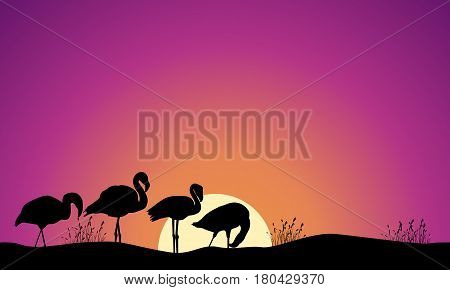 Collection stock of flamingo scene silhouettes vector illustration