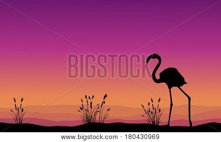 Collection stock flamingo silhouette scenery vector art
