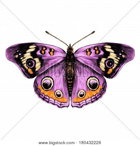 butterfly with open wings top view of symmetry sketch the graph of vector color drawing butterfly with pink wings