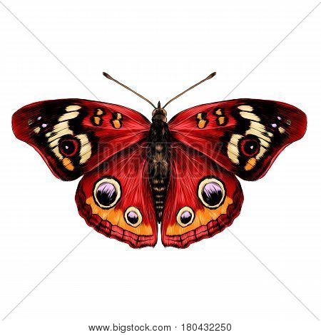 butterfly with open wings top view of symmetry sketch the graph of vector color drawing butterfly with red wings