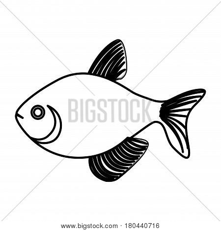 silhouette fish aquatic animal icon vector illustration