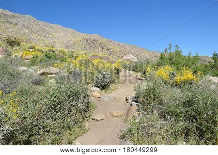 PALM SPRINGS, CA - MARCH 24, 2017: Tahquitz Canyon trail. The canyon is one of the most beautiful and culturally sensitive areas of the Agua Caliente Indian Reservation.