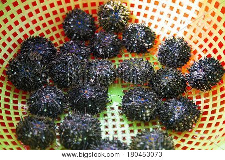 Fresh sea urchins in Phu Quoc island sea, Vietnam