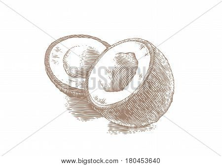 Drawing of wwo pieces of coconut with pulp