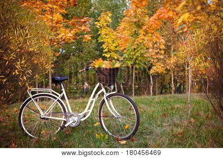 White retro style bicycle with basket with orange, yellow and green leaves, parked in the colorful autumn park