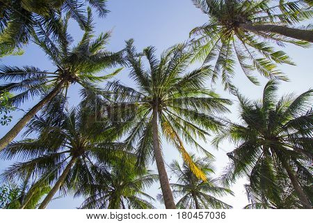 Calm beach with palm tree against bluesky