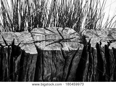 The stiff wood timber and benign grass blade
