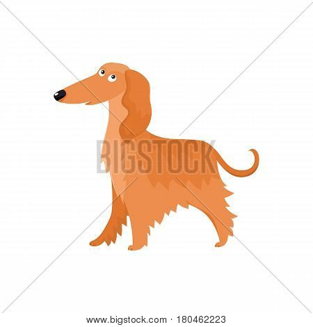 Cute long haired Afghan hound dog character, cartoon vector illustration isolated on white background. Nice and friendly dog character, Afghan hound breed, colorful cartoon illustration
