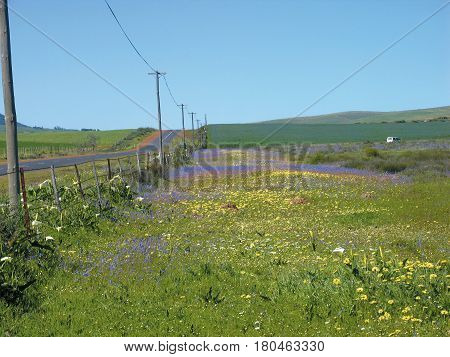 DIFFERENT COLOR  FLOWERS IN THE FORE GROUND WITH GREEN HILLS IN THE BACK GROUND