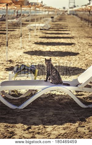 Cat sits on a lounger on Larnaca beach in summer in Cyprus