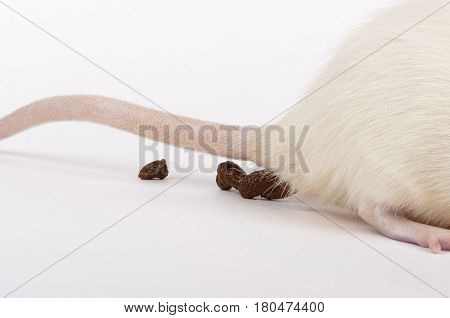 a closeup shot of lab rat dropping excrements
