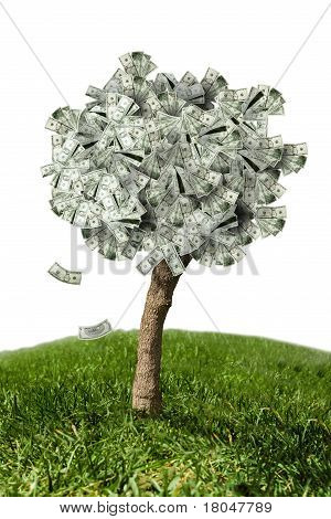 Amazing Money Tree On Grass And White Background