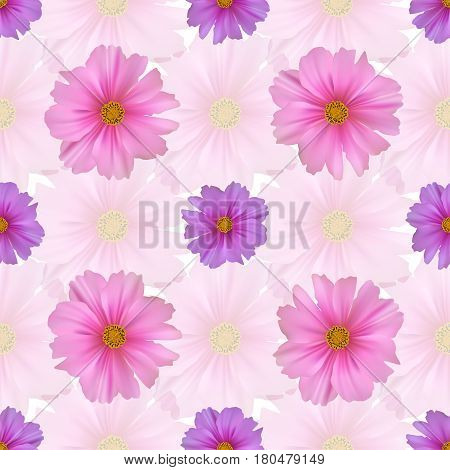 Seamless pattern with cosmos flower. Pink and purple cosmea