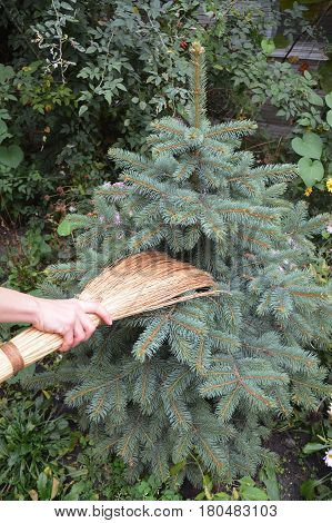 Get rid of spider mites in blue spruce trees with broom. Spiders Web Removal Evergreen.