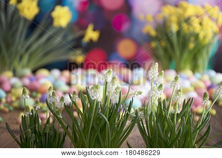 Easter theme. Bouquet of jonquils. Easter eggs. Colorful bokeh, place for typography and logo. Rustic wooden table.