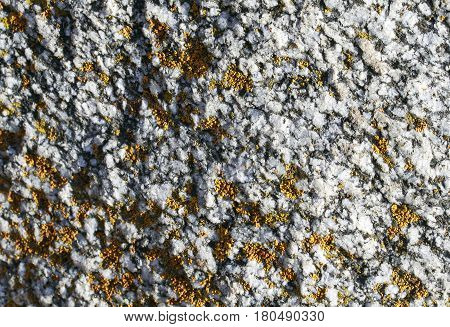 the texture of rough stone covered with tufts of yellow moss