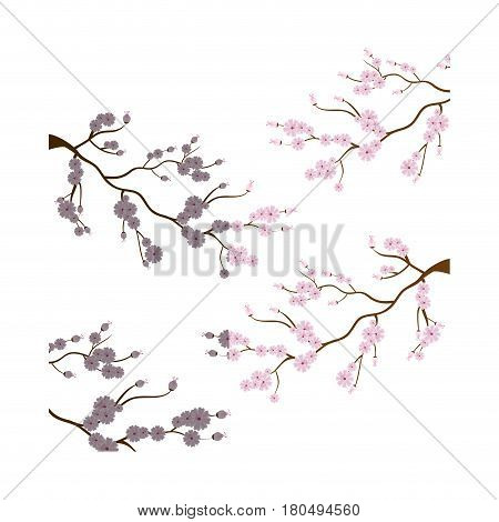 sakura japanese plant icon vector illustration design