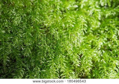 Floral background with fresh greenery leafage in sunlight forest