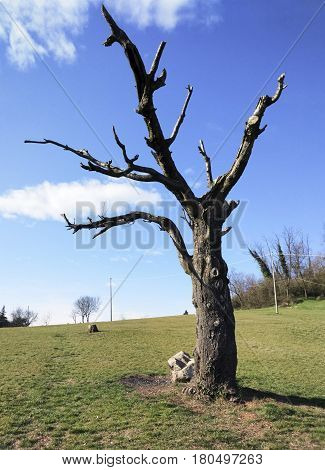 Photo hilly Landscape First floor Dead cherry tree in the summer day