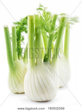 Florence fennel bulbs. Isolated on a white background.