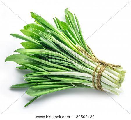Bunch of young fresh wild garlic.