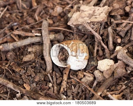 An Empty and Unused Snail Shell on the Floor