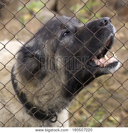 Abandoned dog in the kennel, homeless dog behind bars in an animal shelter.Sad looking dog behind the fence looking out through the wire of his cage.