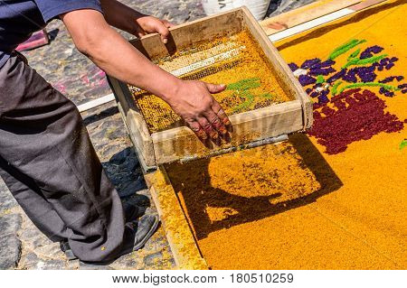 Antigua, Guatemala - March 26 2017: Local sifts dyed sawdust to make Lent carpet for procession in colonial town with most famous Holy Week celebrations in Latin America.