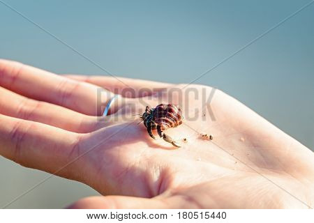 Close up of the small hermit crab on the hand