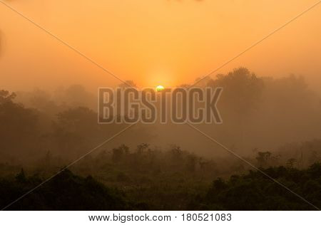 Sunrise over the jungle forest Chitwan national park Nepal