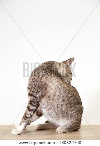 Beautiful little cat wood on white background