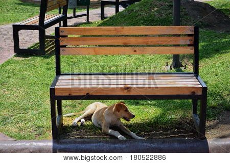 dog sheltering under a bench in a park due to strong heat
