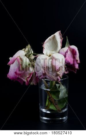 Three wilted roses in a glass of water on black background