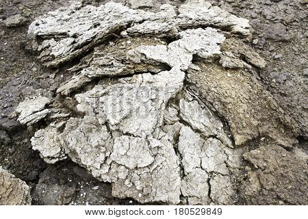 Dried cow dung heap for a long time. Many are used as fertilizer. Which makes plants grow well.