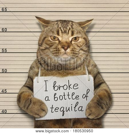 The bad cat smashed a bottle of nice tequila. He was arrested for for that terrible crime.